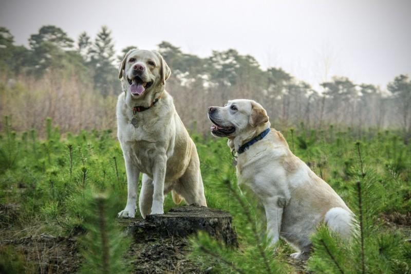 Køb hundefoder hos simbasfoder.dk