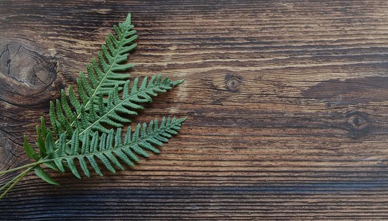 Giv din butik et tropisk præg med kunstige palmer