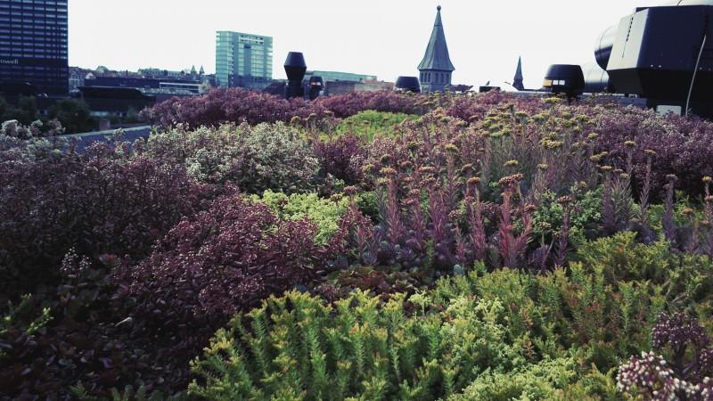 Grønne tage giver plads til naturen i byerne