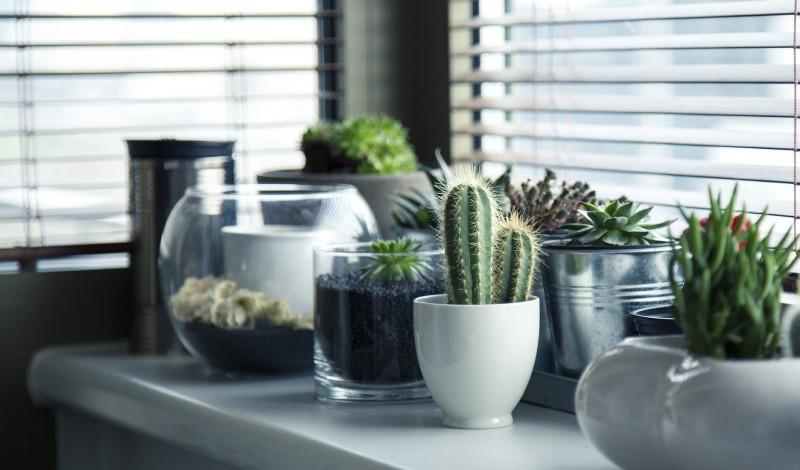Lav skønne stillebens med vaser